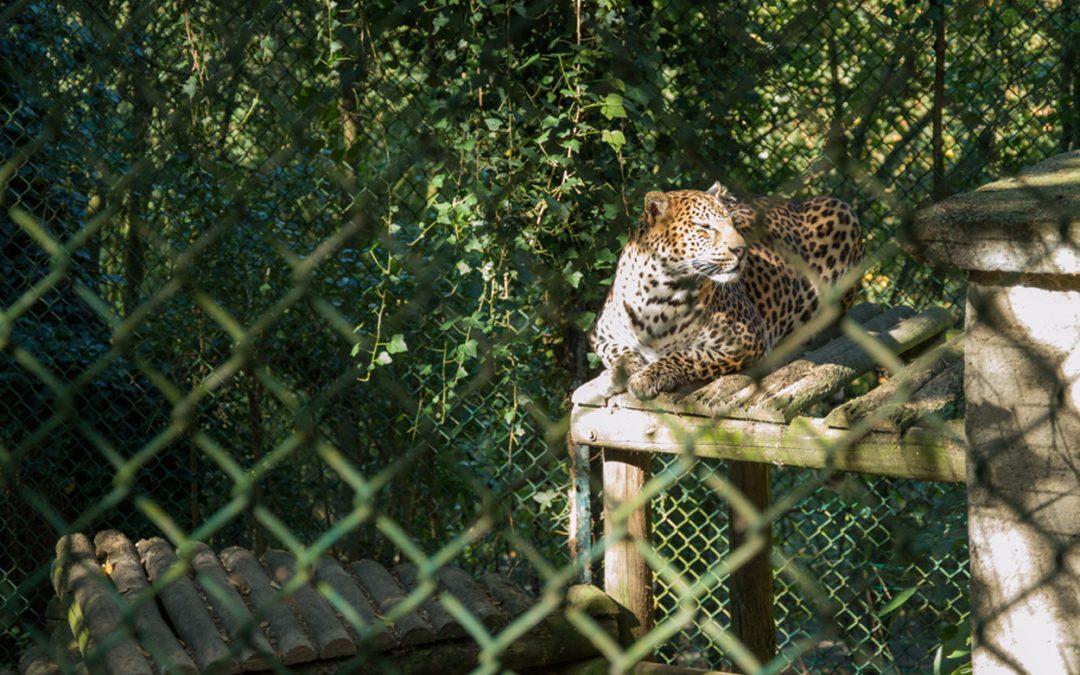 Les zoos