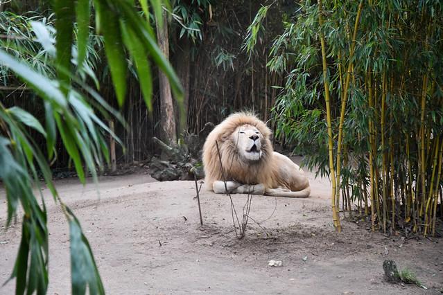 Zoos, parcs d'attractions modernes