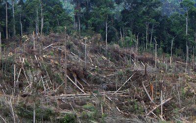 À Bornéo, l'or rouge de la discorde