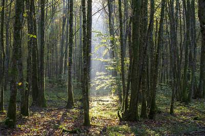 La forêt en quête d'essences